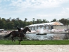 10-chevaux-chantilly-concours