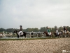 1-concours-chantilly-chevaux