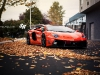 custom-bull-plays-with-autumn-leaves-photo-gallery_2