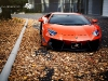 custom-bull-plays-with-autumn-leaves-photo-gallery_3