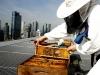 jumeirah-frankfurt-bees