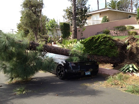 Lamborghini Gallardo Crushed by Tree