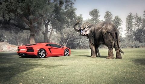 Lamborghini Aventador, ADV.1 Wheels and an Elephant