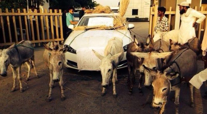 Indian Jaguar XF Owners Insists Donkeys are Better!