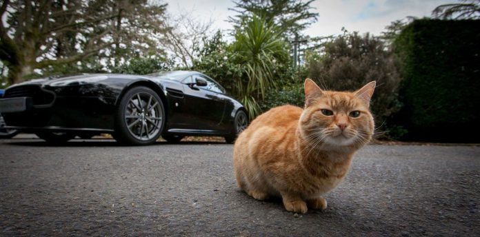 Aston Martin Fat Cat