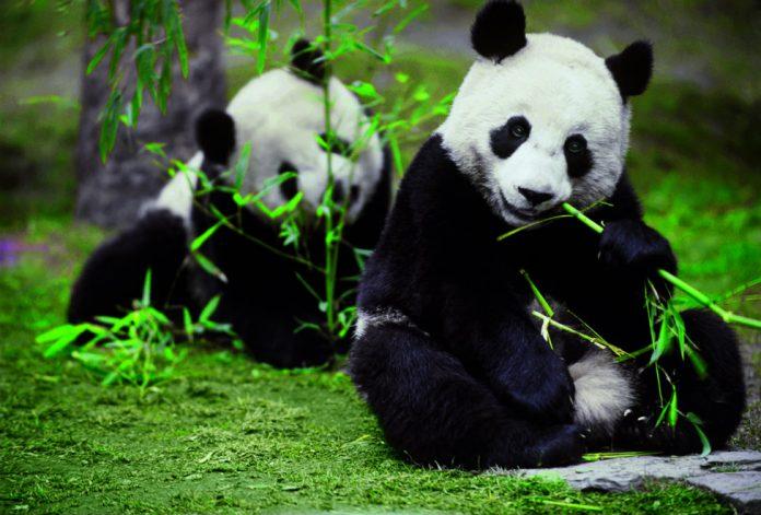 Six Senses Panda